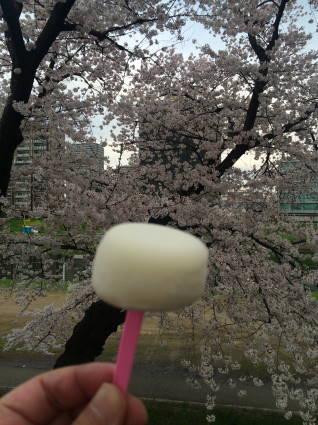 岡崎桜010