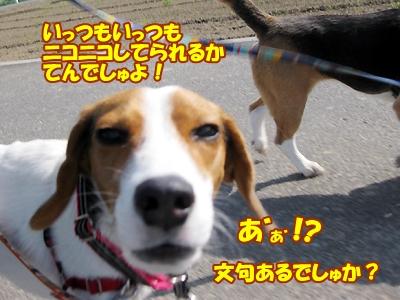 3_20150430122548eca.jpg