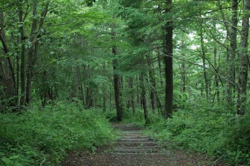 森に行こうよ!