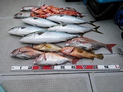 2015-4-18-4今日の釣果 いい天気で楽しい釣りになりましたね またのご乗船お待ちしております。
