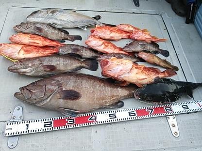 2015-4-25-③今日は高級魚ばかり すごい料理が出来そう