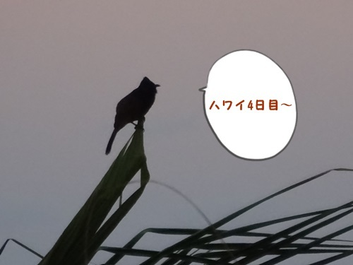 DSC00929.jpg