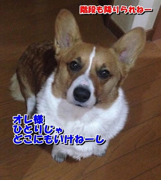 IMG_0669_20150127001427d68.jpg