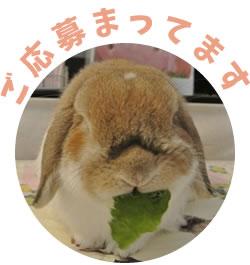 kuzunohade2.jpg