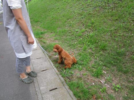 ご近所散歩でワンコラ!