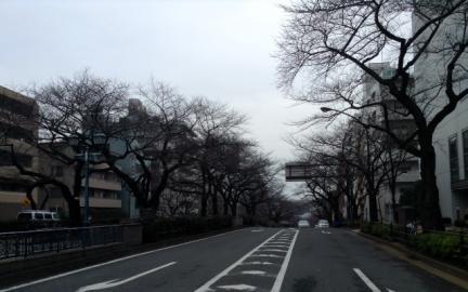 S20150222茗荷谷桜並木