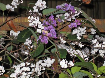S20140317白と紫のはなたち