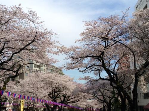 S20150329茗荷谷播磨坂さくら並木