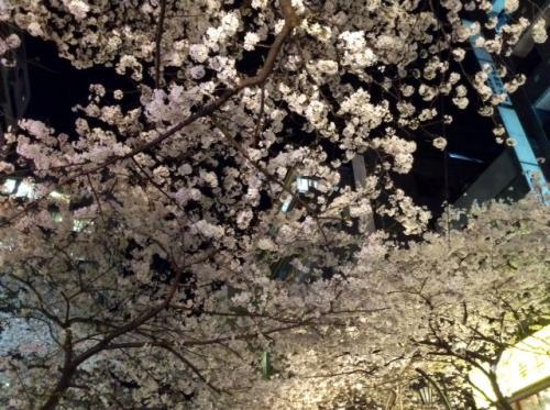 S20150330八重洲夜桜