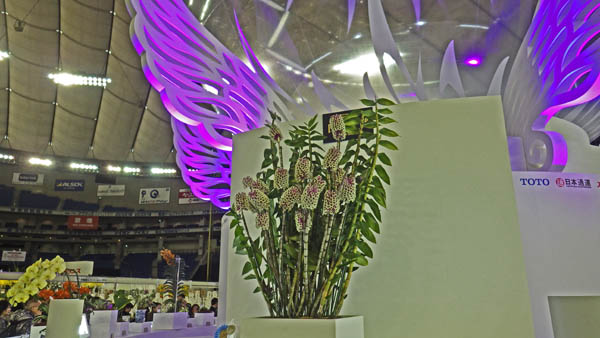 世界ラン展 日本大賞2015