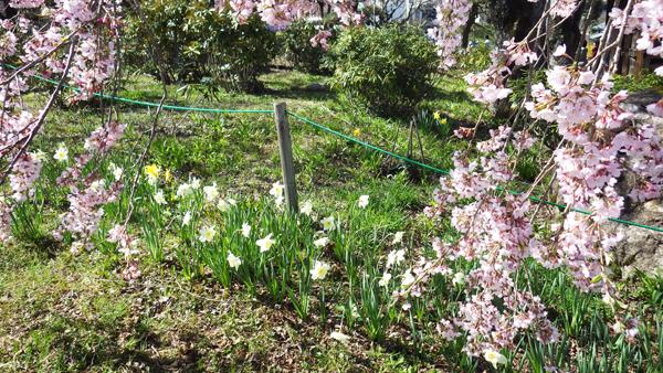 水仙も咲いている
