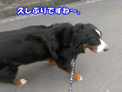 IMAG0262.jpg