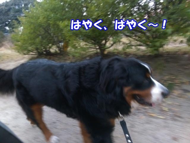 IMAG0308.jpg