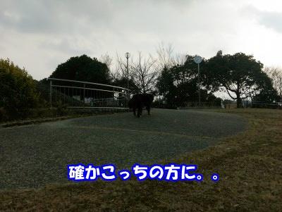 IMAG0382.jpg