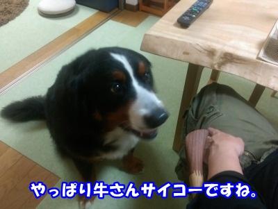 IMAG0944.jpg