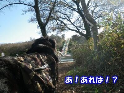 RIMG3078.jpg