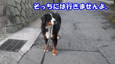 RIMG3898.jpg