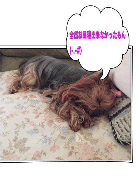 IMG_1473ab.jpg
