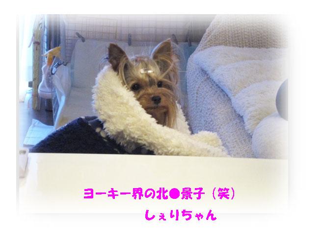 IMG_2238a.jpg