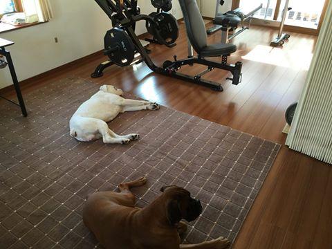 boxerdogs.jpg