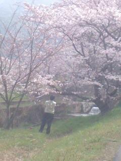 桜を撮る150331