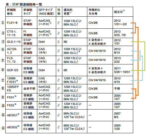 STAP関連細胞株
