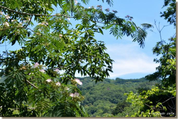 合歓の木の花と山