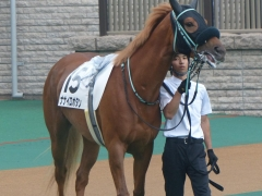 150516-05_Nanairo_Botan.jpg