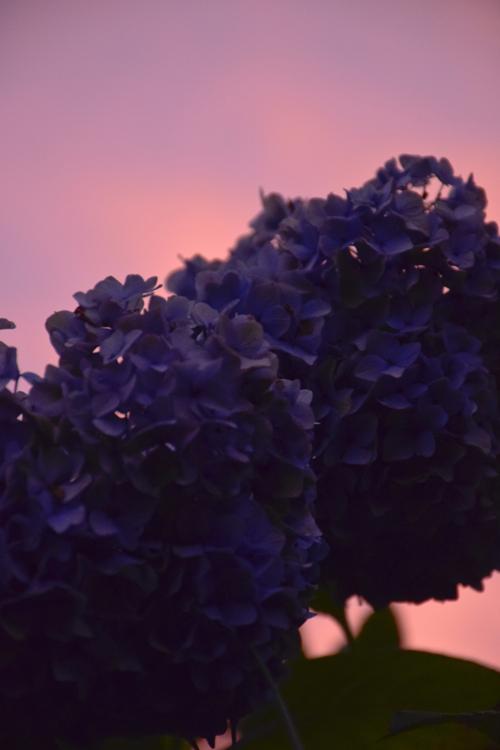 sunset_15_7_5_1.jpg