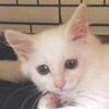 milkye_p1_top1.jpg