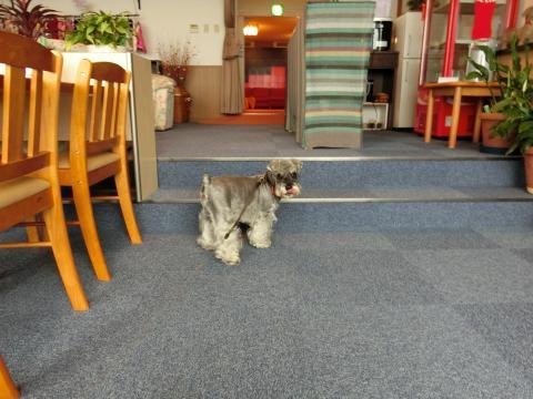 犬御殿のカフェ
