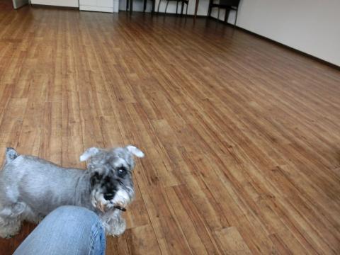犬御殿室内ドッグランにてウィル