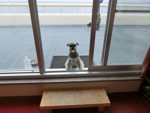 犬御殿屋上ドッグランにてウィル