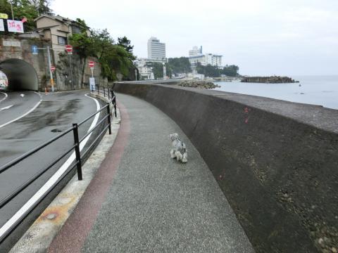 白浜・朝んぽウィル