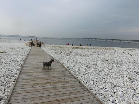 マーブルビーチにてウィル