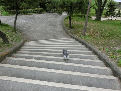 天保山公園にてウィル
