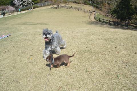 高野山桃山公園にてウィルとレオ君
