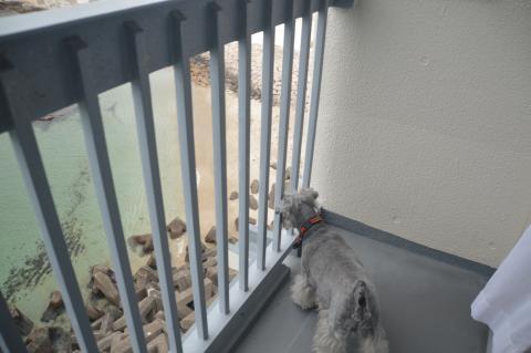犬御殿 部屋のベランダ