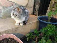 あめや:猫
