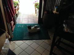 味の小屋:野良猫