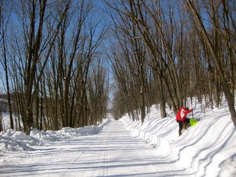 森の道0204