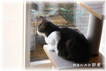 2015.3.17のスージー①