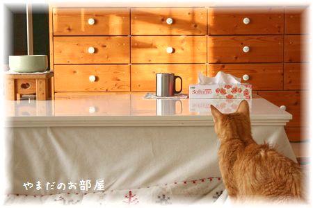 2015.1.13のチャンちゃん①