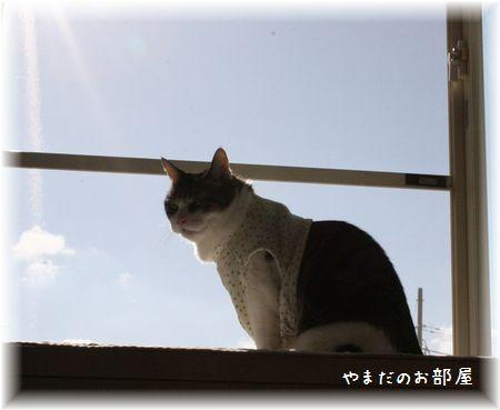 2015.1.11のスーちゃん