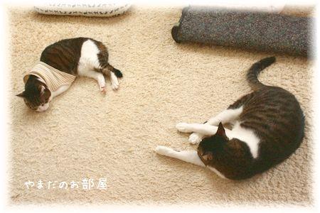 2015.1.14のスーちゃんとスージー②