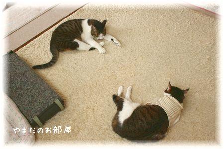 2015.1.14のスーちゃんとスージー③