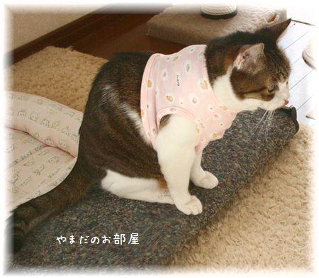 スーちゃん 新しいお洋服試着②