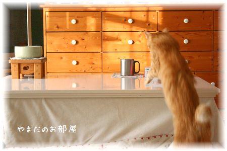 2015.1.13のチャンちゃん②