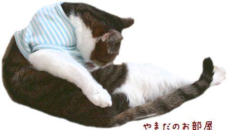 2015.5.12のスーちゃん