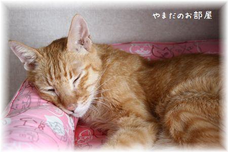 2015.3.28のチャンちゃん